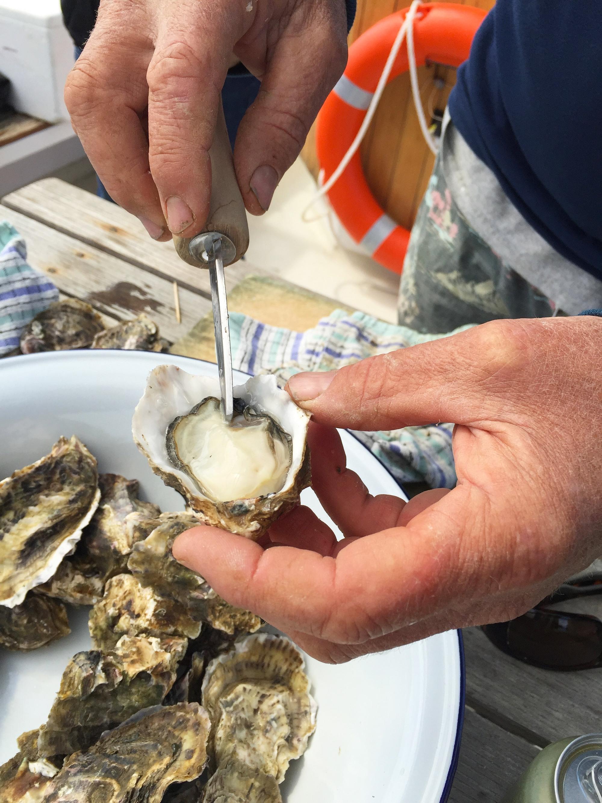 oyster3 copy